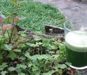 Zumos o batidos verdes para un desayuno saludable