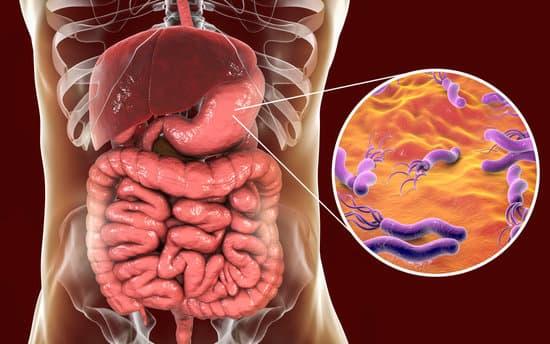 Helicobacter pylori :equilibra tu sistema digestivo