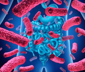 Composición y evolución de la microbiota humana
